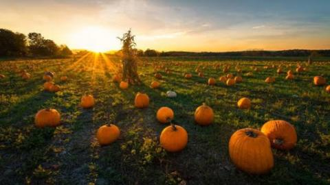Opine on Pumpkin Spice and Beer